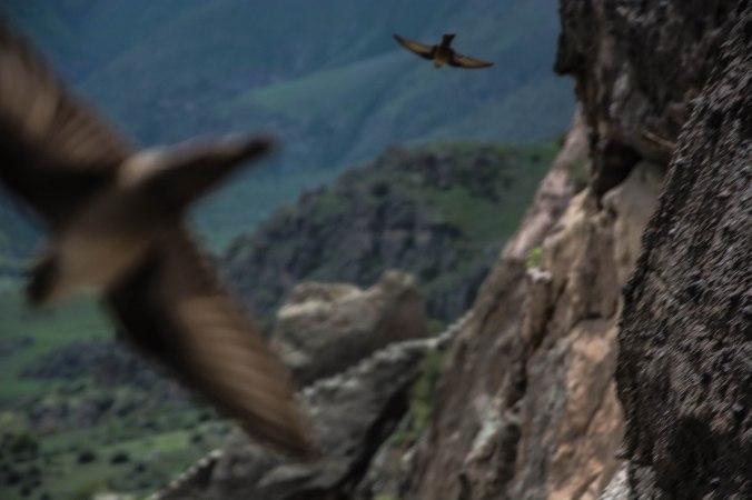 Pássaro em precipício
