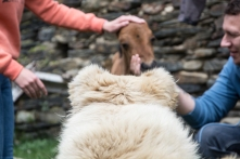Cachorro observa o novo membro da família em Ushguli